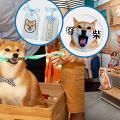 【將軍澳好去處】柴犬精品期間限定店!柴柴店長照片展/影相位/獨家精品