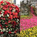 【銅鑼灣好去處】2019維園花卉展3月中開鑼!40萬棵花朵任影/門票詳情率先睇