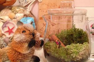 免費再造盆栽工作坊! WWF「自然一居」展覽