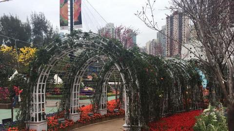 玫瑰花做主題花!2017香港花卉展覽三月舉行