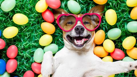 Egg-cellent人狗復活節派對開鑼 大玩狗狗瑜珈+獵蛋行動嬴SWITCH
