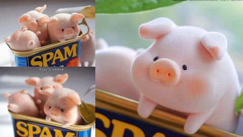 肥嘟嘟超萌豬仔匿入午餐肉罐頭!原創羊毛氈公仔變「罐頭豬仔」玩具 香港有售