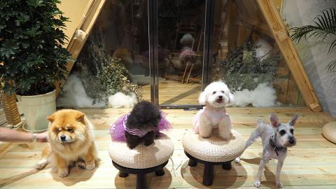 【九龍灣美食】九龍灣新開4千呎室內寵物餐廳 專屬寵物餐/超過萬件寵物用品