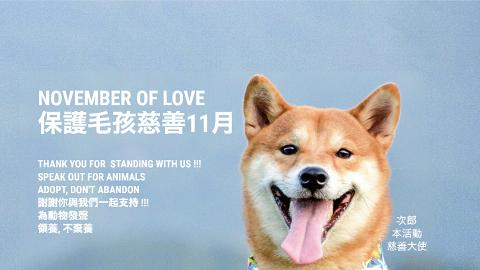 韓式餐廳The Joomak行動支持領養不棄養 全數捐出11月盈利幫助本地流浪貓狗