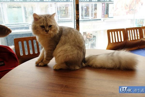 小心貓仔偷食!銅鑼灣甜品屋鹹甜茶點二人餐