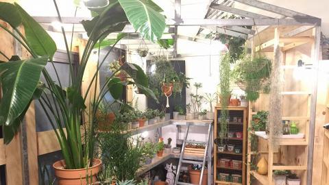 文青打卡熱點  日式雜貨店種出小綠洲