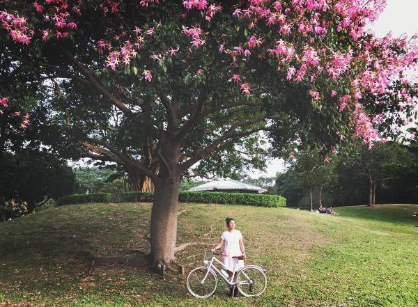 迪欣湖美人樹(#uhkphoto投稿相片:IG@popopokokoko)