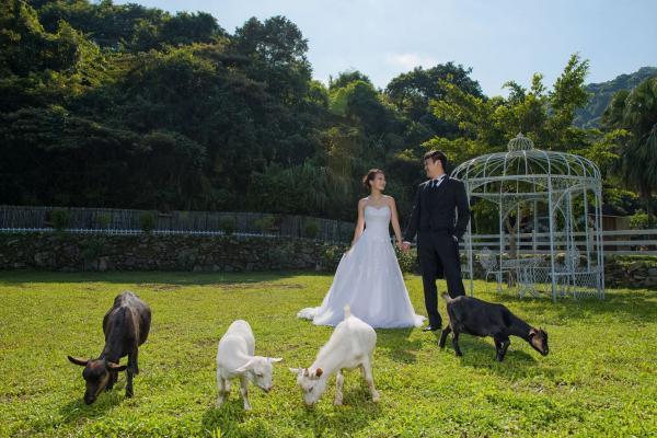 拍攝婚紗照, 一如置身外國 (圖片來源:FB@清新地有機休閒農莊)