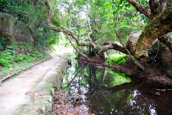 谷埔有一小溪貫穿各「肚」。