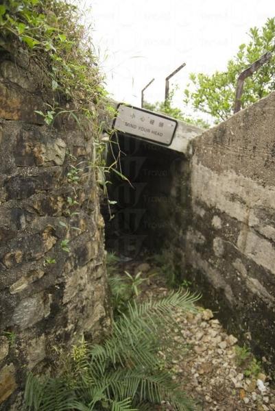 炮台荒廢多年,因此四周長滿雜草。