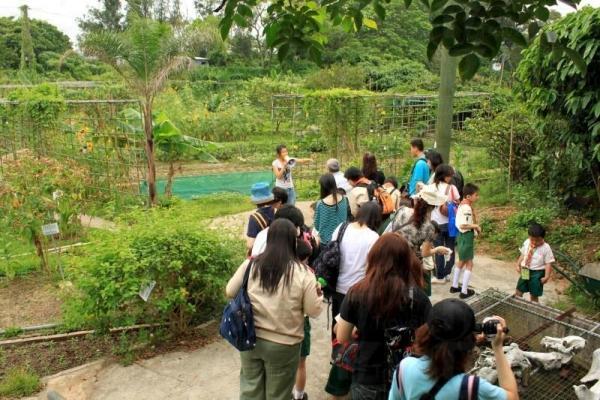 每逢周末都有不少團體來到假日農場參觀。