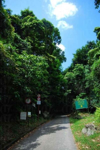 大埔滘自然護理區的樹木林蔭。