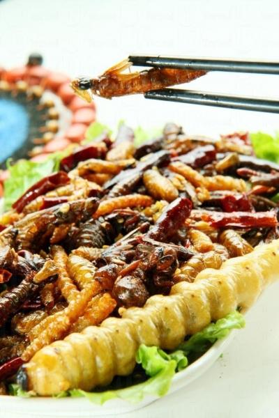 雲南人家的蟲食中的酥炸雜蟲有:竹蟲、蠶蛹、蚱蜢、水蜻蜓、金蟬子、柴蟲等款式。