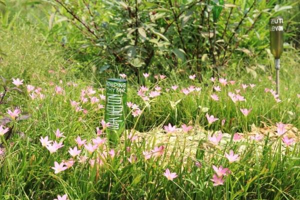 園內種滿各式各樣的香草,如百里香及檸檬草等。