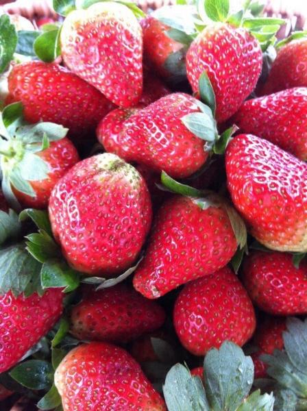 有機草莓都好大粒!