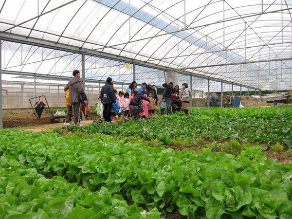 有心機農場是香港數以百計的有機農場中甚具規模的一個。