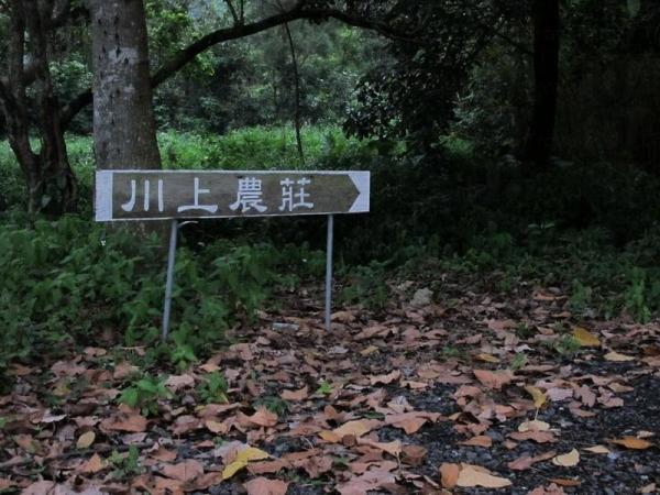 川上農場位於粉嶺鶴藪。