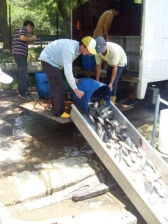 魚場經常補充各類魚種