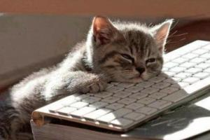 美國最新研究:懶惰是IQ高的特徵