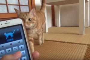 1秒令貓星人痴埋身 實測人貓交流App翻譯人話變貓語