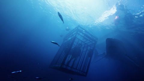 全海底拍攝《鯊海47米》美女賞鯊魚斷籠墮47米深海