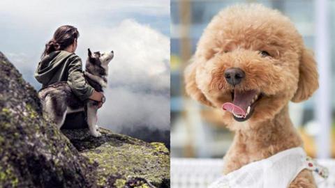 養狗的單身人士更長命?!研究:可減少患心血管疾病機會
