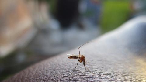 原來蚊仔都會欺善怕惡?研究:成日被蚊咬全因為你太善良!