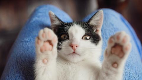 【動物福利法】政府擬修例保障動物權益 開放公眾諮詢期收集虐待動物刑罰意見