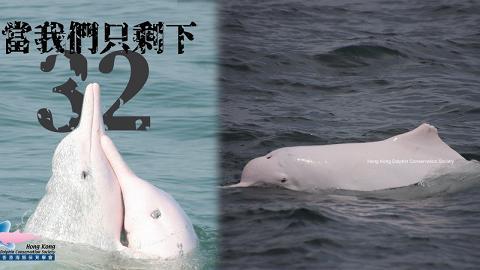 隨基建落成生態環境受到嚴重破壞 白海豚數字再創新低全港只剩32隻