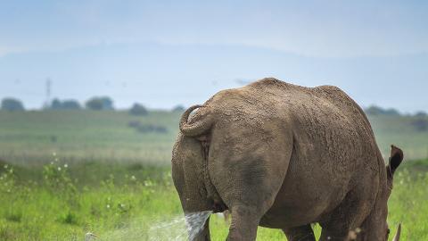 英國動物保護組織舉行搞笑動物攝影比賽 40張作品入圍海獺雙手擺面O咀超可愛