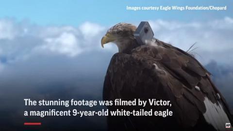 白尾海鵰綁攝影機飛越阿爾卑斯山脈 記錄冰川融化望大眾正視全球暖化