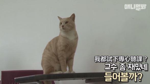 貓貓陪你上課?!韓國大學生合力照顧流浪貓