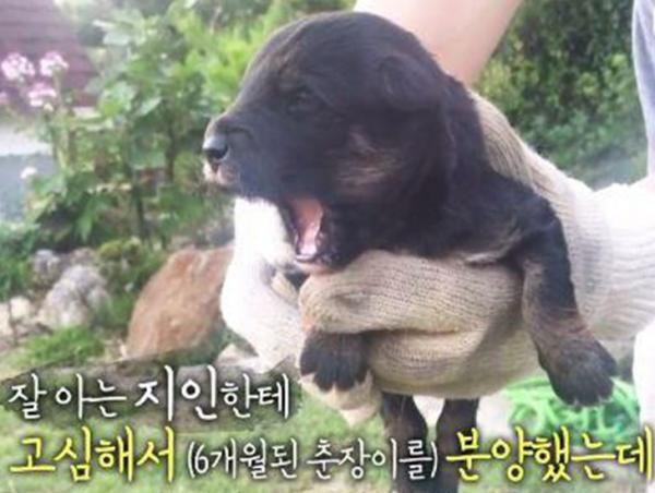 流浪狗激動再見媽媽!韓國節目助其找回主人