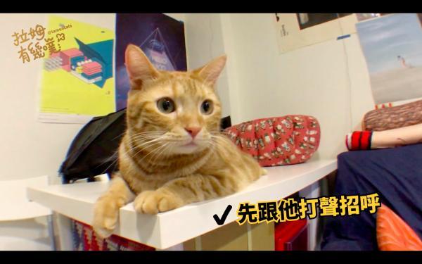 可爱猫咪按摩动态图片