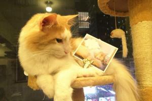 喵星球貓貓明信片,下次要買!(喵星球Facebbok)
