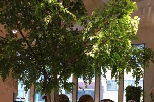 OVOCAFE其實也是花店的一部分。