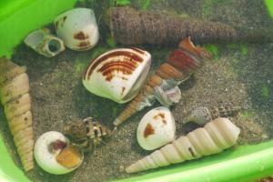我們除了摸蜆之餘,還在泥灘挖了許多貝殼類生物放到盆子內。