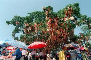 昔日的許願樹掛滿了市民拋上去的「願望」,可是同時也令到許願樹不勝負荷。(相片來源︰香港經濟日報)