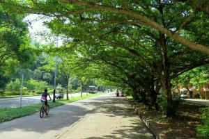 山道以外皆綠樹成蔭,夏天散步也不怕太陽直曬。