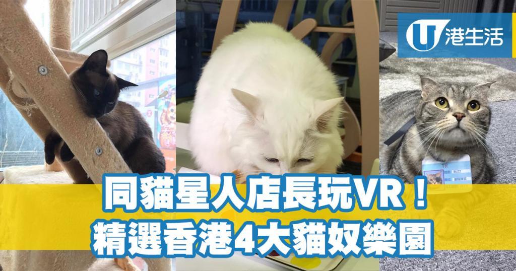 同貓星人店長玩VR!精選香港4大貓奴樂園