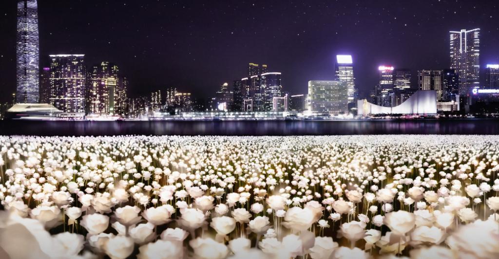 25,000朵LED白玫瑰登陸海濱 情人節限定綻放