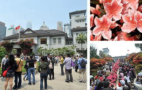 賞杜鵑花!香港禮賓府免費開放