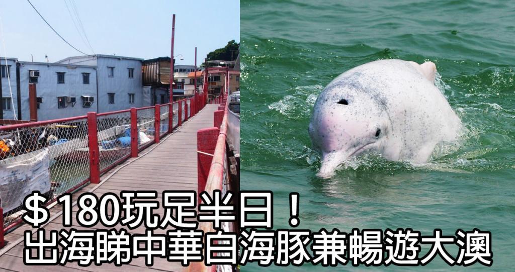 $180出海睇中華白海豚!大澳文化生態半日遊