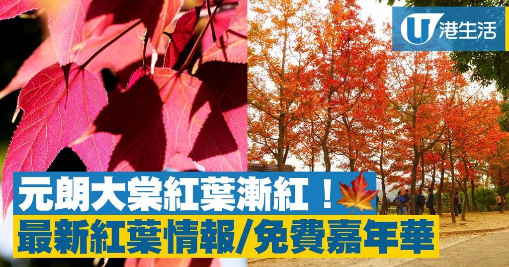 【元朗好去處】元朗大棠紅葉漸紅!最新紅葉情報/免費嘉年華/攤位遊戲