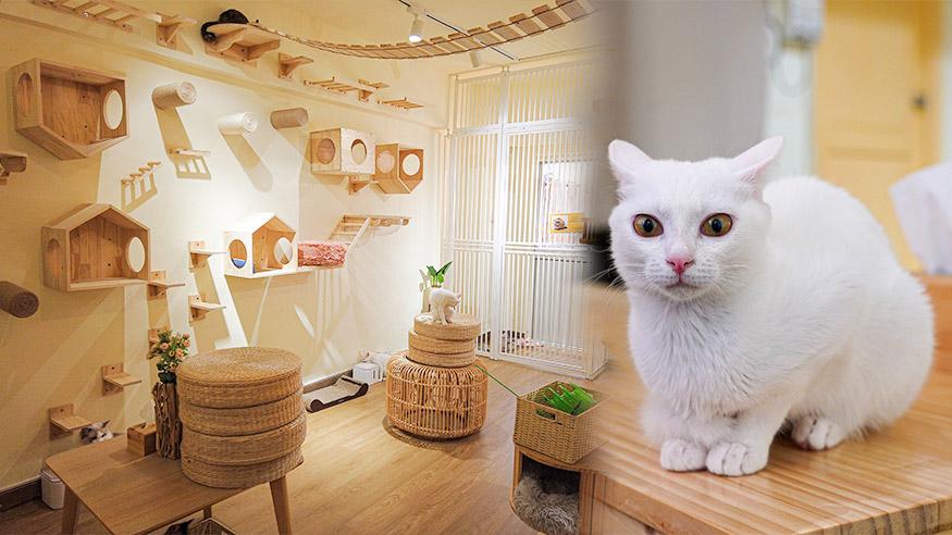 【旺角好去處】旺角新開1000呎貓貓Cafe 全港首間設戶外空間!與貓B零距離接觸+設貓咪領養服務