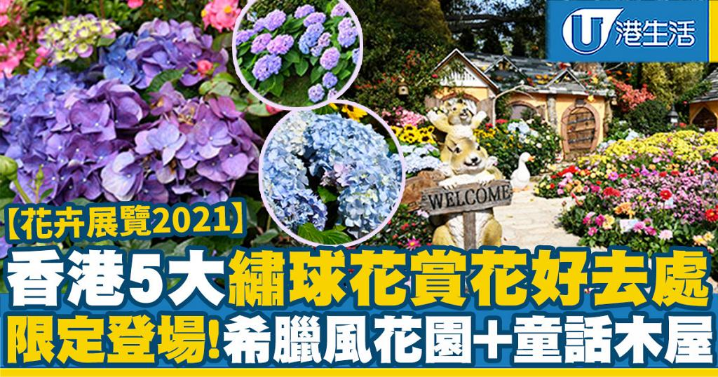 【花卉展覽2021】香港5大粉色調繡球花賞花好去處!大埔海濱公園/獅子山公園/荔枝角公園