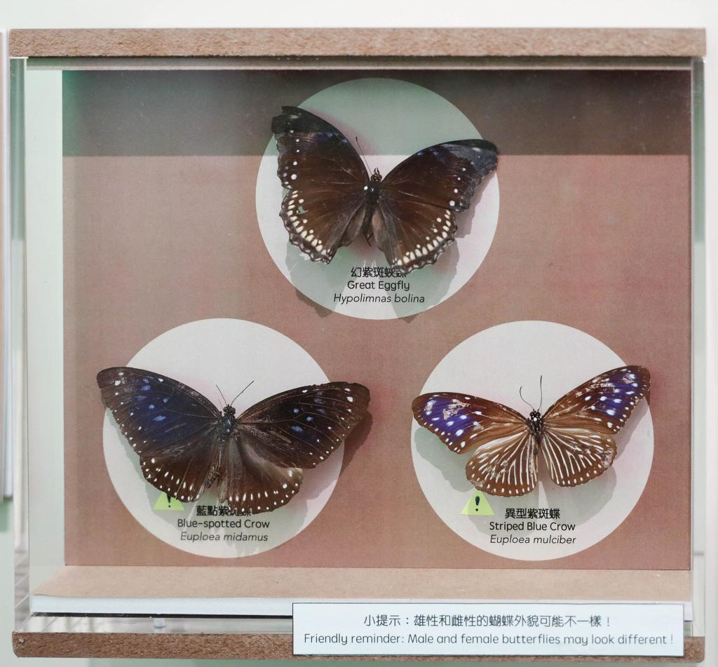 【親子好去處】龍虎山環境教育中心「動物的煩惱日常展覽」開幕!10大展區/互動遊戲/免費入場