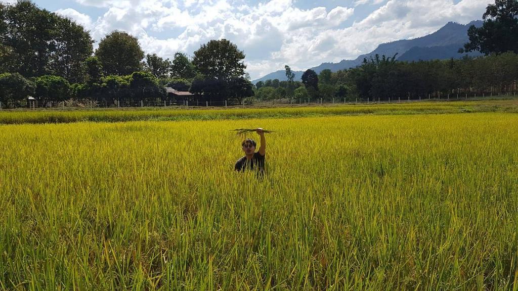 AbouThai阿布泰國生活百貨創辦人買農田種米 計劃在港推出自家品牌白米!