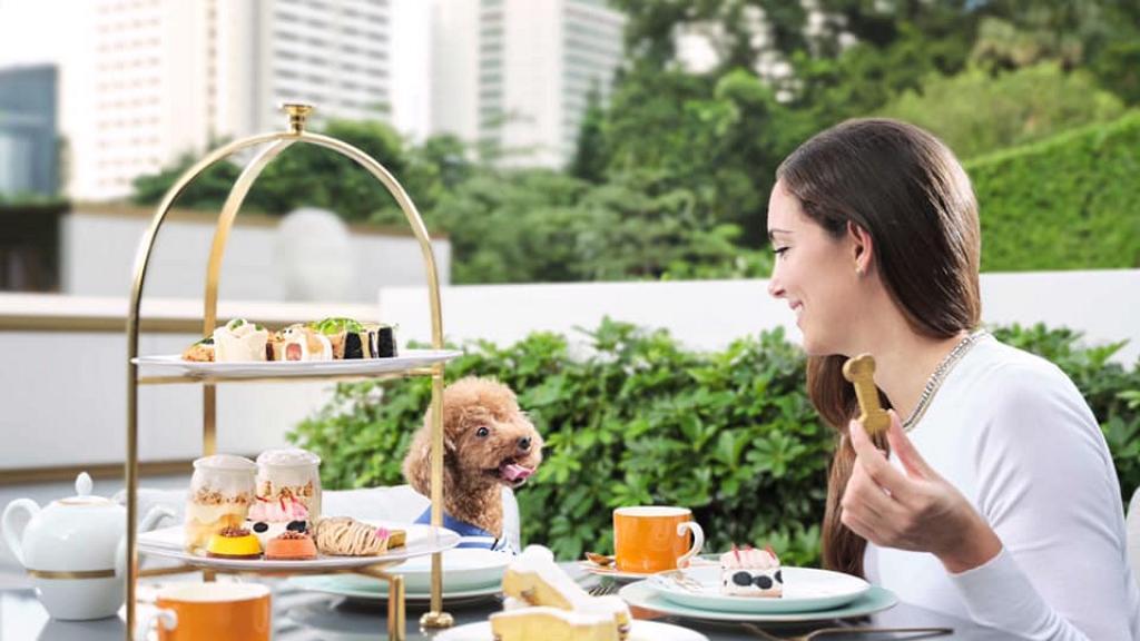 香港10大Pet-Friendly寵物友善酒店推介 帶毛孩去Staycation!大草地放電+寵物攝影+歎下午茶