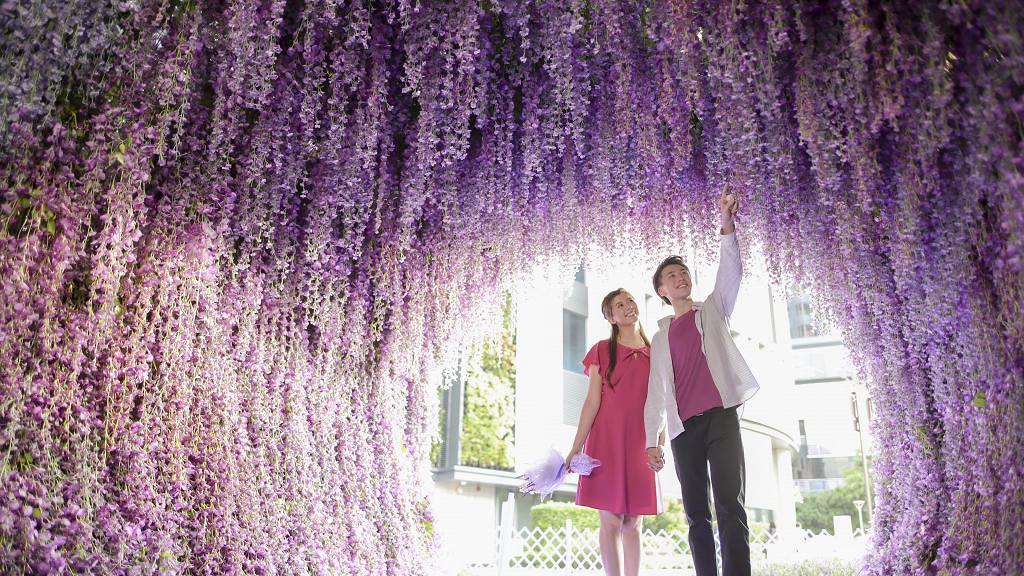 【北角好去處】全港首個3000呎紫色花海登陸北角匯海濱花園!20米長紫藤花隧道